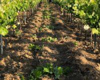 Vini-artigianali-Ferracane (5)