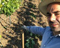 Vini-artigianali-Ferracane (6)