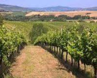 Vini artigianali La Casa dei Cini (1)