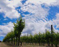 Vini artigianali La Casa dei Cini (3)_1