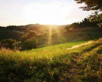 Vini artigianali La Valle del Sole (1)