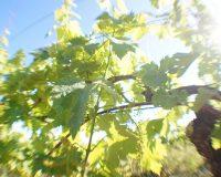 Vini artigianali La Valle del Sole (5)