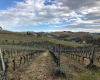 Vini artigianali La Valle del Sole (6)