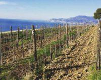 Vini artigianali Macchion dei Lupi (1)_1