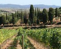 Vini artigianali Macchion dei Lupi (2)