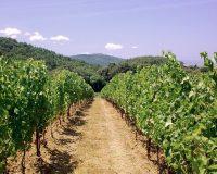 Vini artigianali Macchion dei Lupi (4)