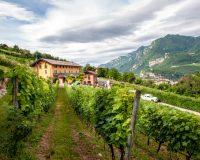 Vini-artigianali-Mas-dei-Chini (2)