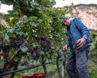 Vini-artigianali-Mas-dei-Chini (6)