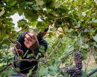 Vini-artigianali-Mas-dei-Chini (7)