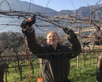Vini-artigianali-Maso-Grener (11)