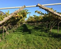Vini-artigianali-Maso-Grener (3)