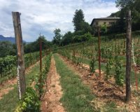 Vini-artigianali-Maso-Grener (5)