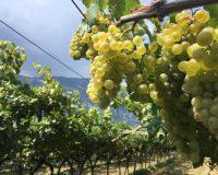 Vini-artigianali-Maso-Grener (6)