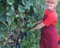 Vini-artigianali-Maso-Grener (9)