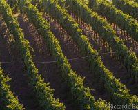 Vini-artigianali-Piotta (15)