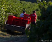 Vini-artigianali-Piotta (16)
