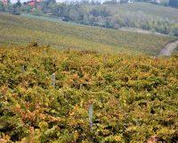Vini-artigianali-Piotta (47)