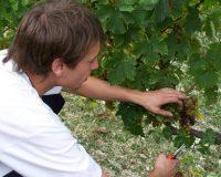 Vini-artigianali-Piotta (6)