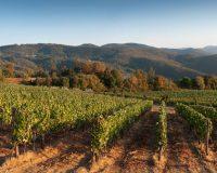 Vini-artigianali-Pomaio (12)