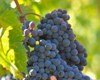Vini-artigianali-Pomaio (5)