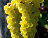 Vini-artigianali-Tenuta-Stella (1)