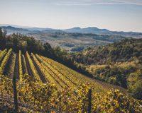 Vini-artigianali-Tenuta-Stella (9)