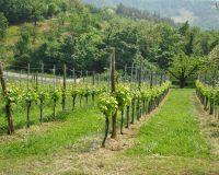 Vini-artigianali-Terraquilia (16)