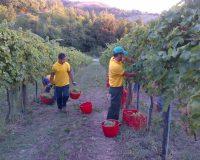 Vini-artigianali-Terraquilia (18)