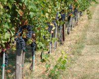 Vini-artigianali-Terraquilia (3)