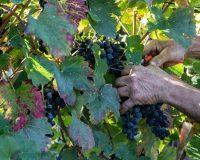 Vini-artigianali-Terraquilia (4)
