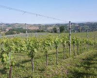 Vini-artigianali-Terraquilia (6)