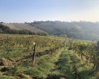 Vini artigianali Tomassetti (1)