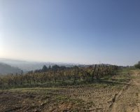 Vini artigianali Tomassetti (2)