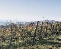 Vini artigianali Tomassetti (3)