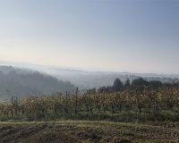 Vini artigianali Tomassetti (4)