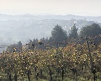 Vini artigianali Tomassetti (5)