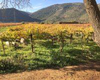 Vini-artigianali-Valle-Reale (3)
