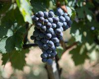Vini-artigianali-Valle-Reale (4)