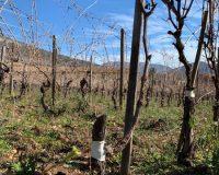 Vini-artigianali-Valle-Reale (5)