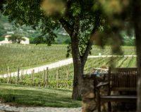 Vini-artigianali-Valle-Reale (7)