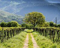 Vini-artigianali-Valle-Reale (8)