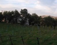 Vini artigianali Vigna della Cava (41)
