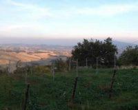 Vini artigianali Vigna della Cava (42)