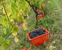 Vini artigianali Vitali (11)