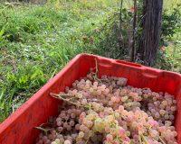 Vini artigianali Vitali (12)