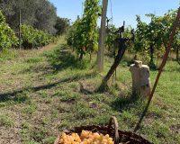 Vini artigianali Vitali (13)