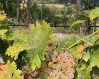 Vini artigianali Vitali (14)