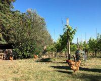 Vini artigianali Vitali (2)