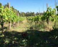 Vini artigianali Vitali (2)_1