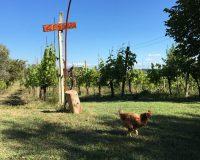 Vini artigianali Vitali (3)